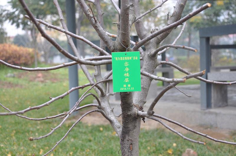 描写果树的句子